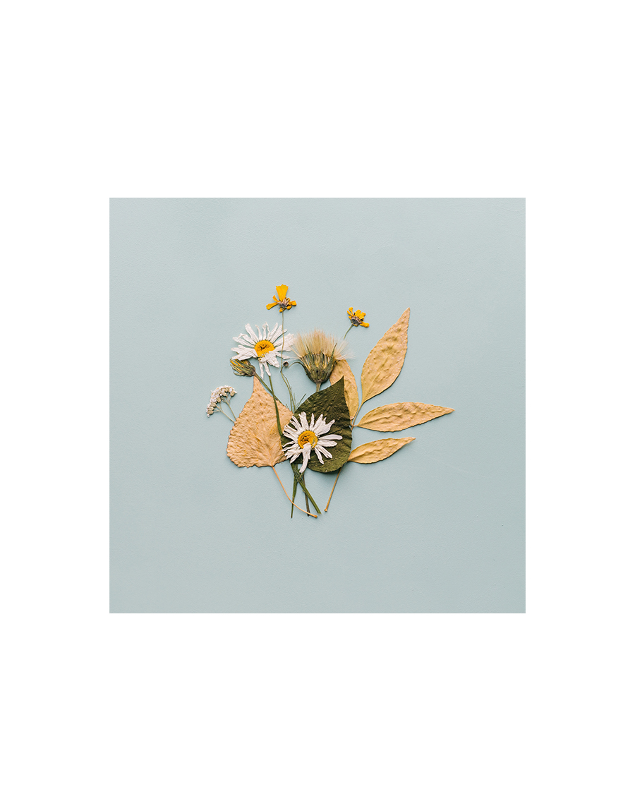 Spring/Summer 2021 Print Trend - Pressed Flower - Patternbank