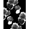 Monochrome Graphic Floral (Original)