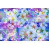 Floral Mosaic Blossom (Original)