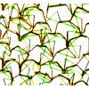 Sewn Lines (Original)