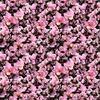 Pink Orchid Noir (Original)