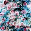 Roses on Blue (Original)