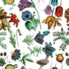 Botanical Congress (Original)