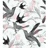 Birds_love (Original)