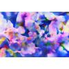 Blossom Swirl (Original)